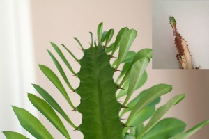 cactus-with-leaves-2