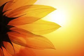 Sunshineadded